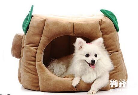 如何为狗狗挑选适合的狗窝